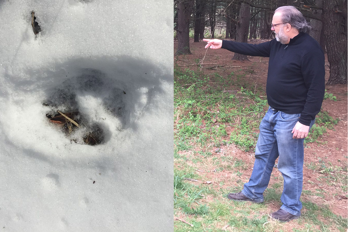 Mike Weilbacher, director of the Schuylkill Center, points to the spot where a staff member took a photo, right, in February of what is believed to be a coyote track.