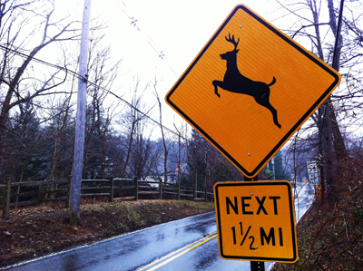 Though no plan is in place to take care of Radnor Township´s growing deer problem, officials said they want to do more than put up traffic signs.