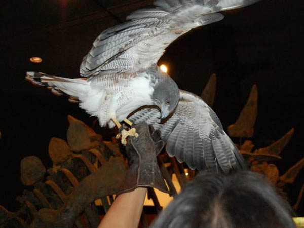 Among today´s Family Day activities at the Delaware Museum of Natural History is a bird show. (Photo via Facebook)