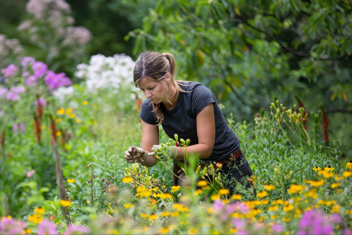 Mary Mantey, a horticulturalist and house gardener at Bartram's Gardens, tends to perennials.