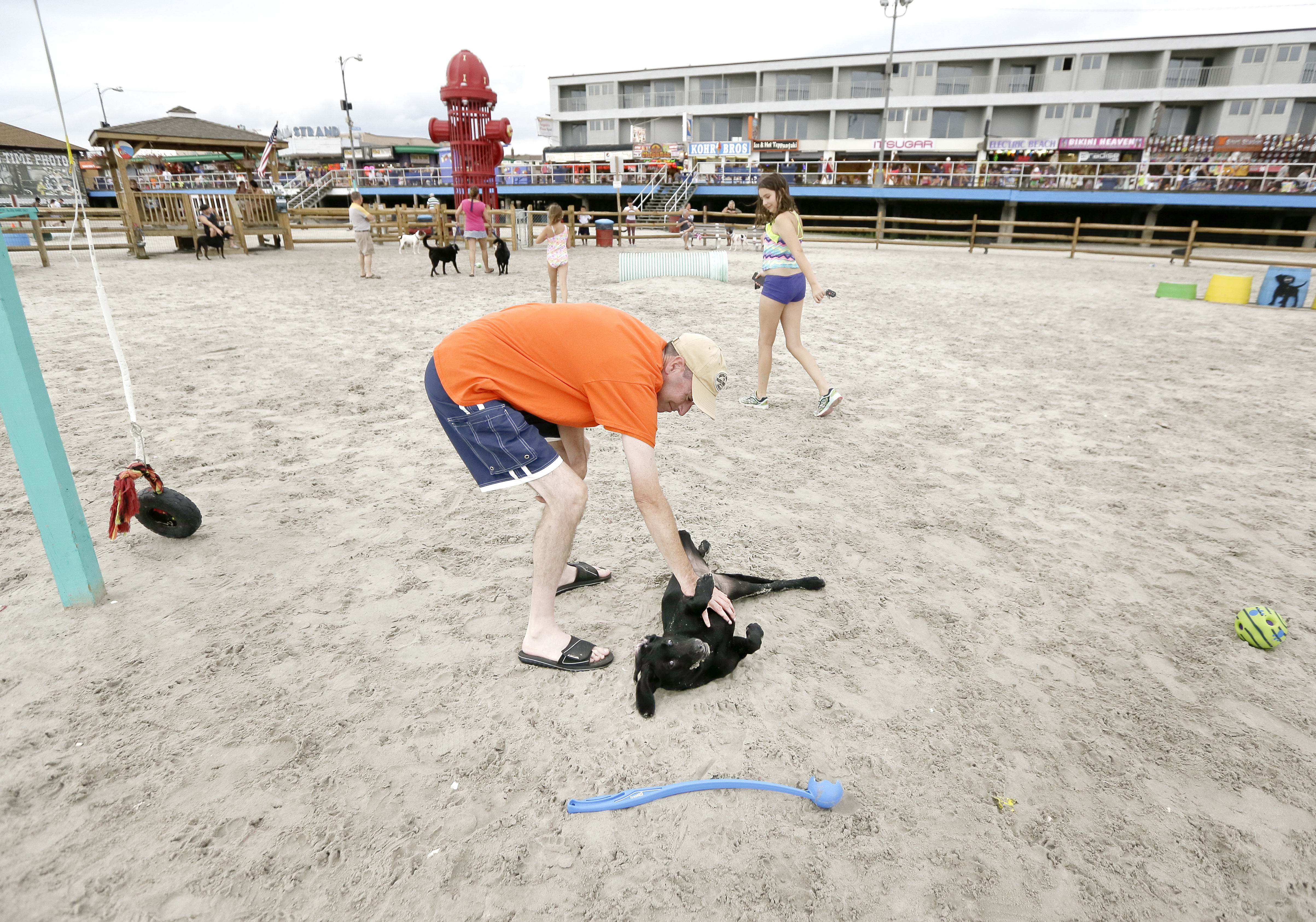 Joe Connor of Phila scratches the belly of his 4 month old black lab Chloe who was enjoying her first time at Wildwood´s dog park on the beach between Maple and Glenwood Avenues. on Aug. 23, 2017.