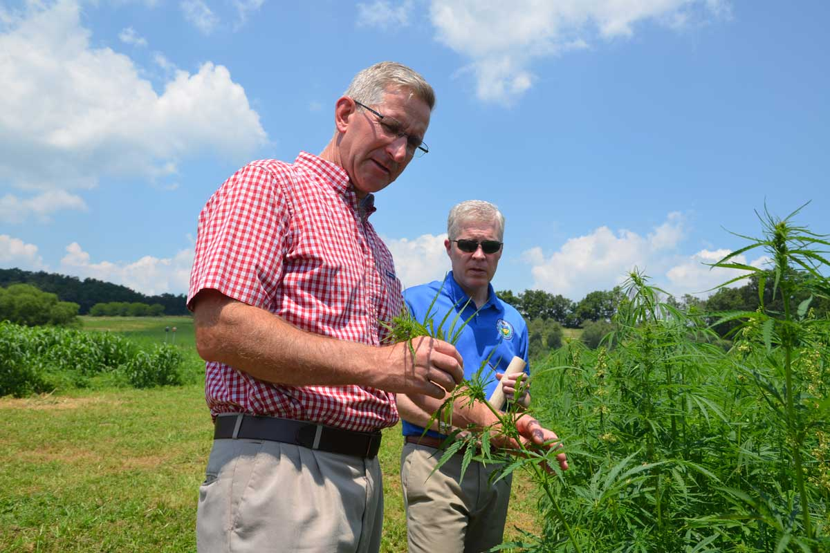 """Agriculture Secretary Russell Redding examines hemp plants with William """"Bill"""" Evans, chief of staff for PA Senator Judy Schwank, at the Rodale Institute outside Kutztown, Berks County, on Wednesday, July 19."""