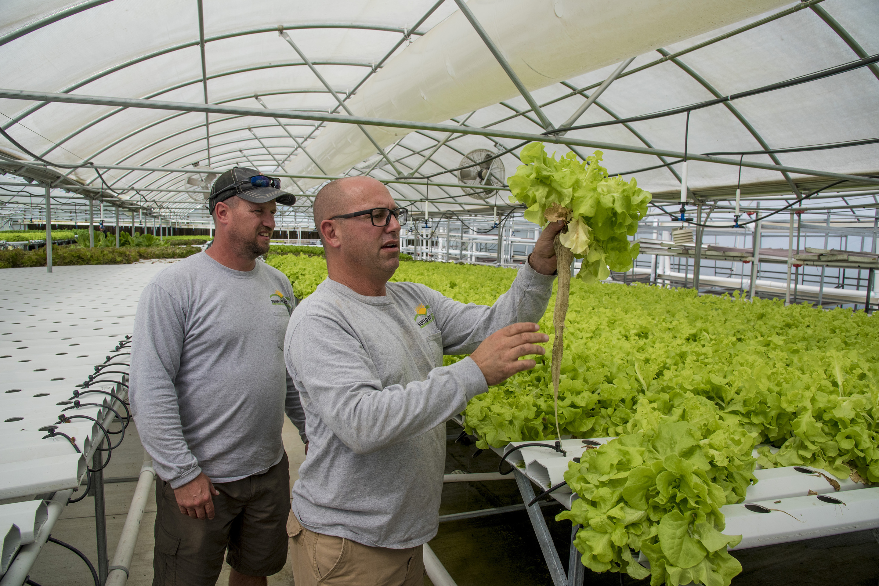 At Sorbello Farms, partners Steve Vazquez (left), and Kris Wilson check on the growth of bib lettuce growing in one of their greenhouses in Woolwich Township, N.J., Sept. 21, 2017.