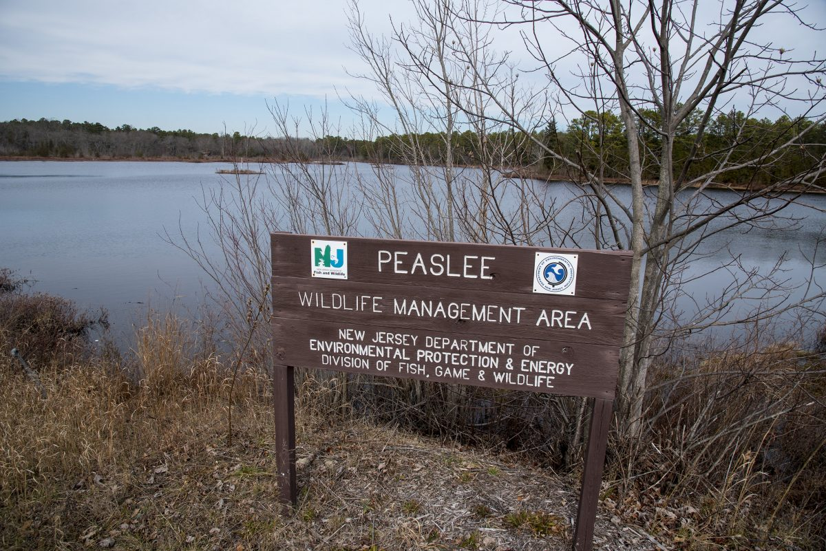 The Peaslee Wildlife Management Area on N.J. State Route 49 in Cumberland County.