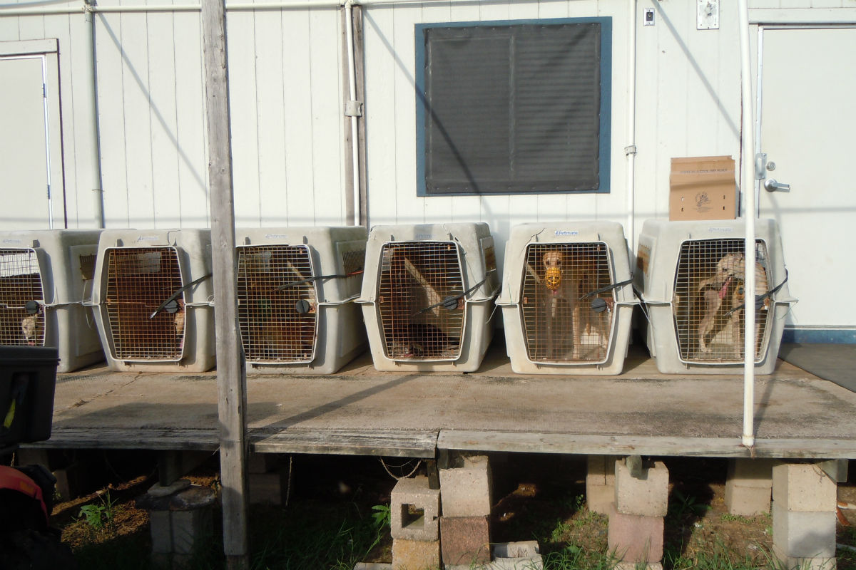 A former employee of the Pet Blood Bank in Texas said this photo shows crated greyhounds awaiting blood draws.