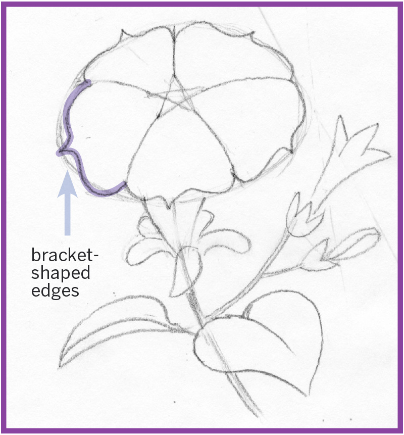 Art thief draw a petunia philly the edge of each of the 5 petals is shaped like a bracket if you are not familiar with this shape try making a few practice ones ccuart Choice Image