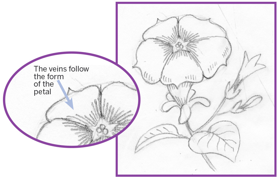 Art thief draw a petunia philly indicate the top of the flowers stigma with three little circles as you draw the fine veins on the flower try to follow the curve ccuart Choice Image