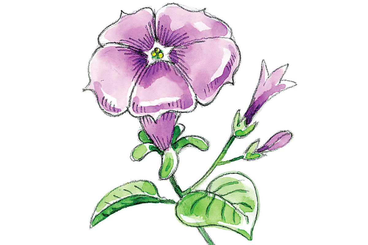 Art thief draw a petunia philly ccuart Choice Image