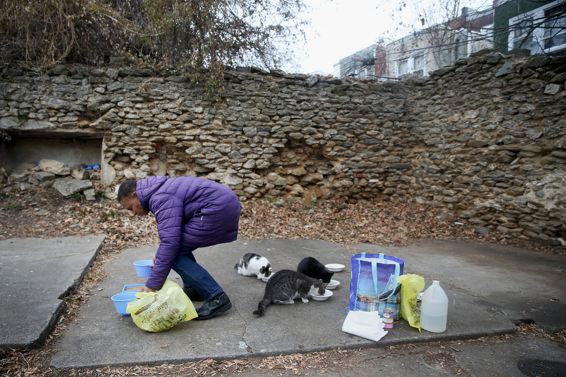 Pat Frederick pets stray cats in her Germantown neighborhood on Friday, Dec. 22, 2017. Frederick has been taking care of dozens of stray cats — including feeding them daily, getting them spayed or neutered and promoting adoption — for about eight years, despite her worsening personal health issues.