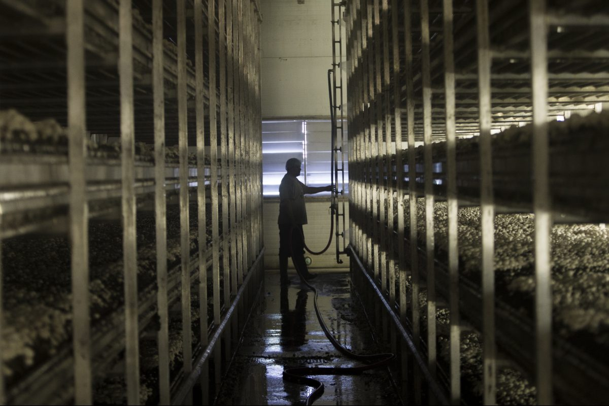 Chester Co.'s powerhouse mushroom farms have a new vision to expand: growing veggies indoors