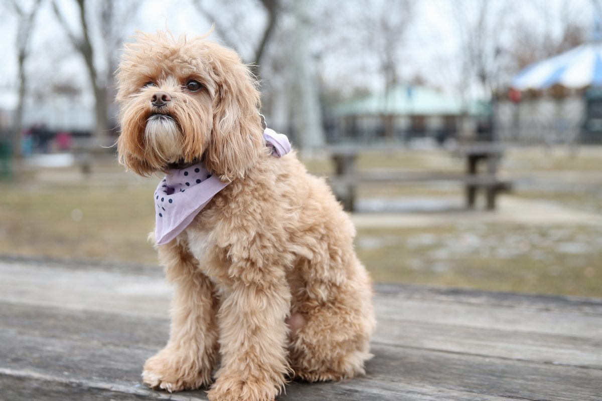 """Sunny Bear sits for a portrait at Franklin Square. She has become an Internet celebrity thanks to Twitter posts of her photo with quotes from """"The Art of War."""""""