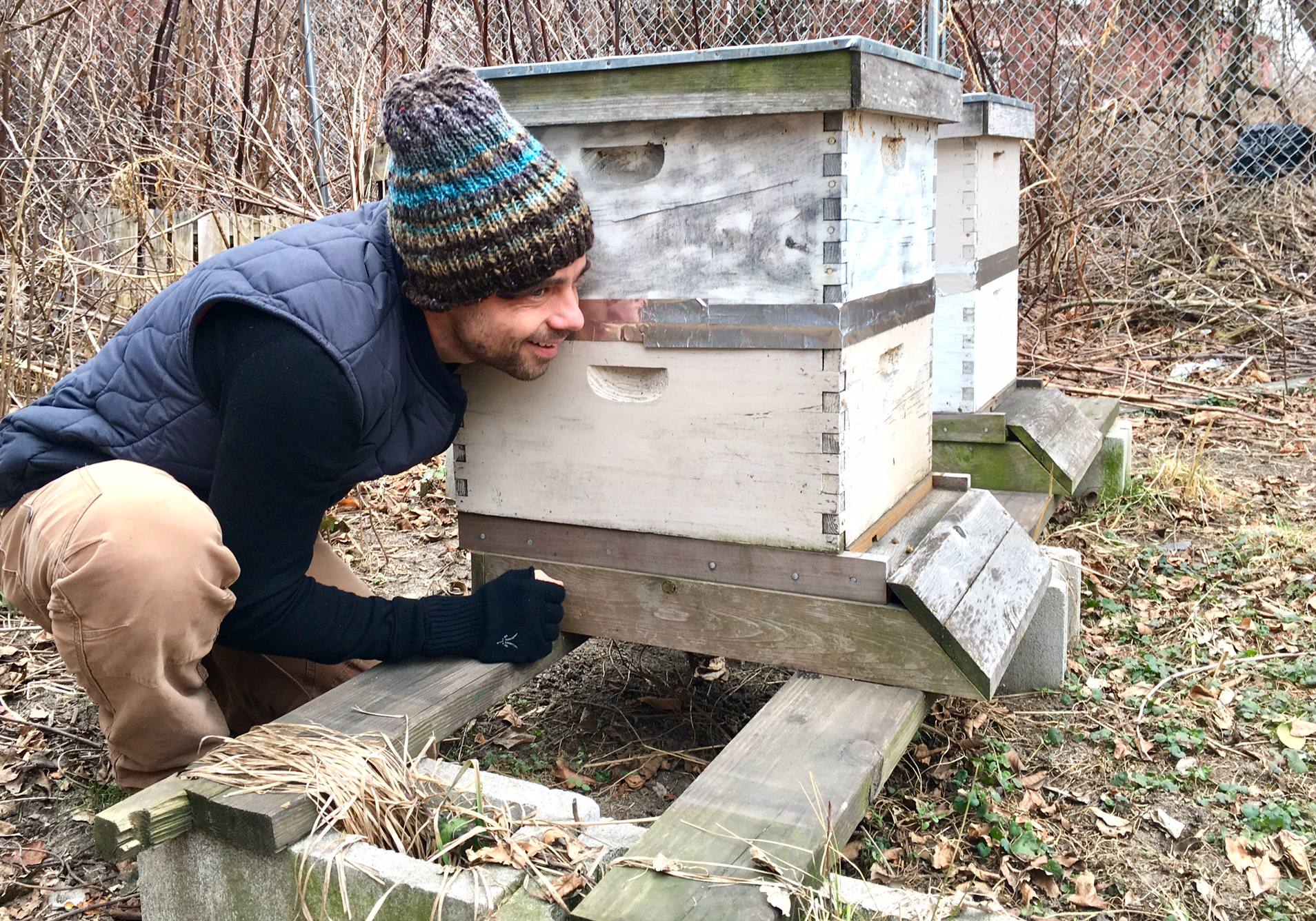 Jonathon ´Farmer Jon´ Compton listens to the honeybees after tapping on the side of the hive he maintains at Camden´s Center for Environmental Transformation.