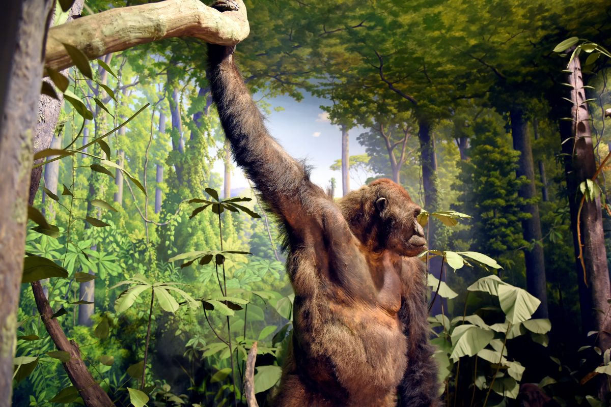 Academy of Natural Sciences renovates its dioramas for the first time since the 1930s