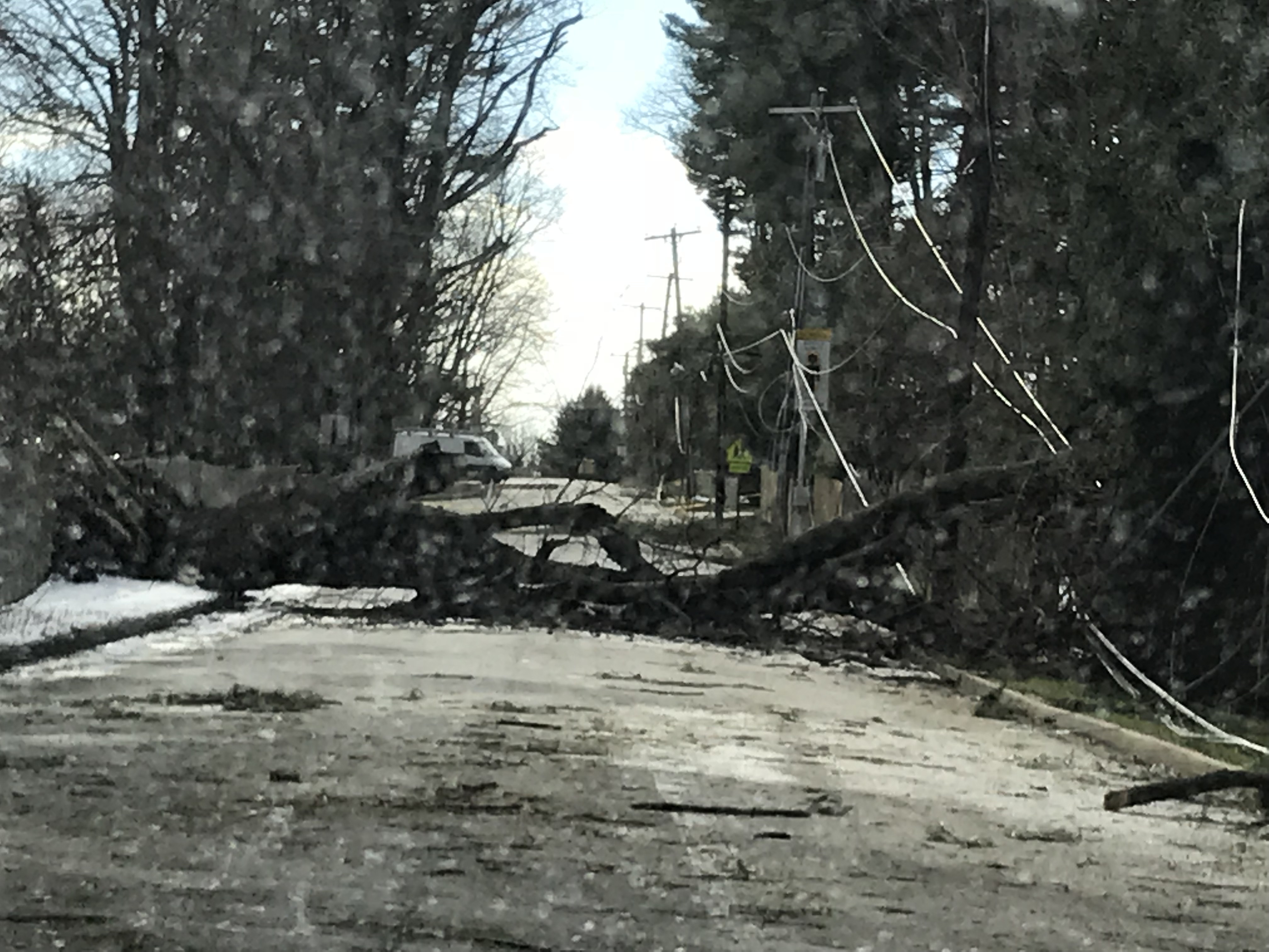 The downed tree behind Amy Seiler´s home in Bryn Mawr