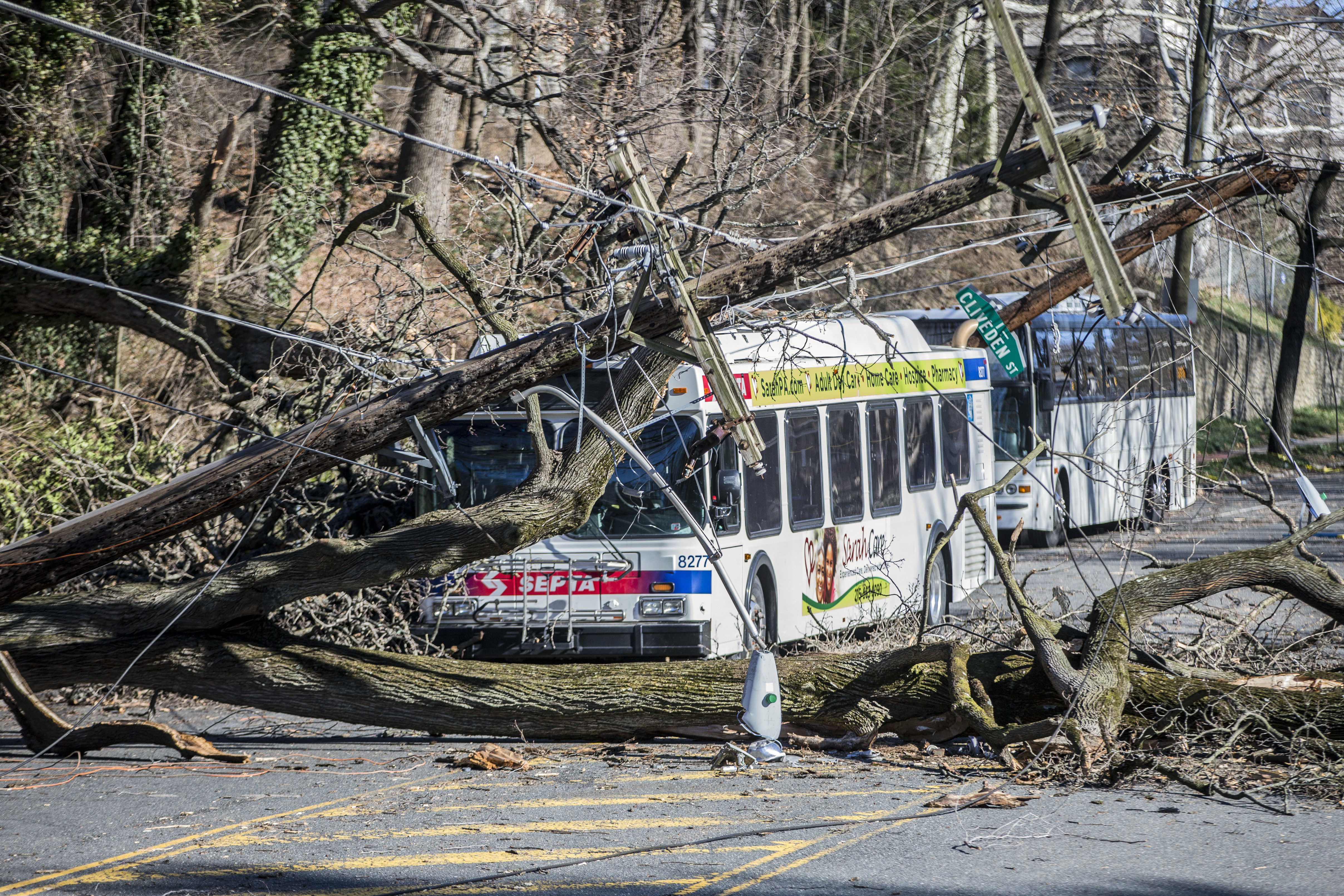 A SEPTA bus is covered by a tree that collapsed onto power lines due to the March 2 storm.