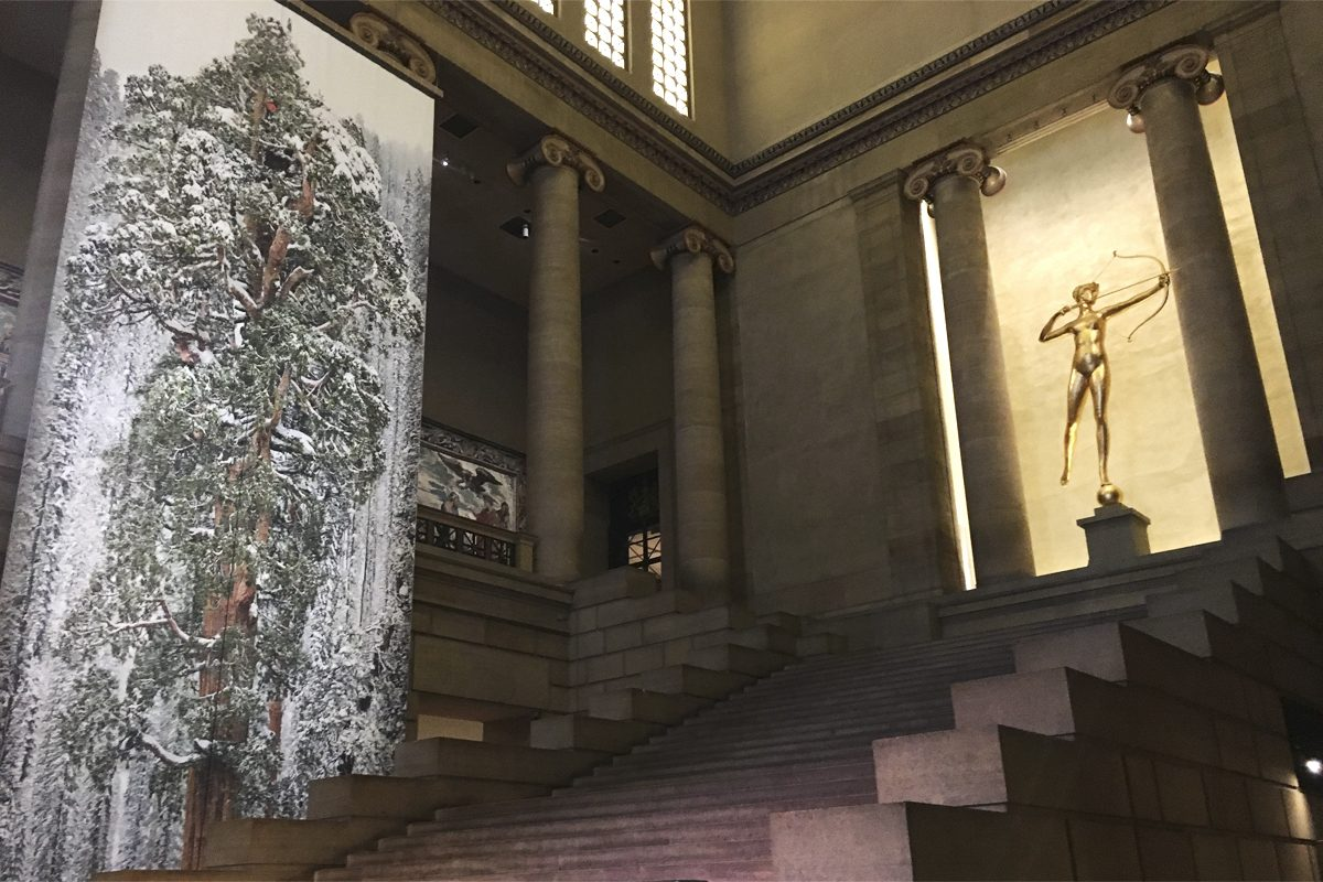 A 60-foot print of a 3,200-year-old sequoia tree hangs in the Great Stair Hall at the Art Museum.