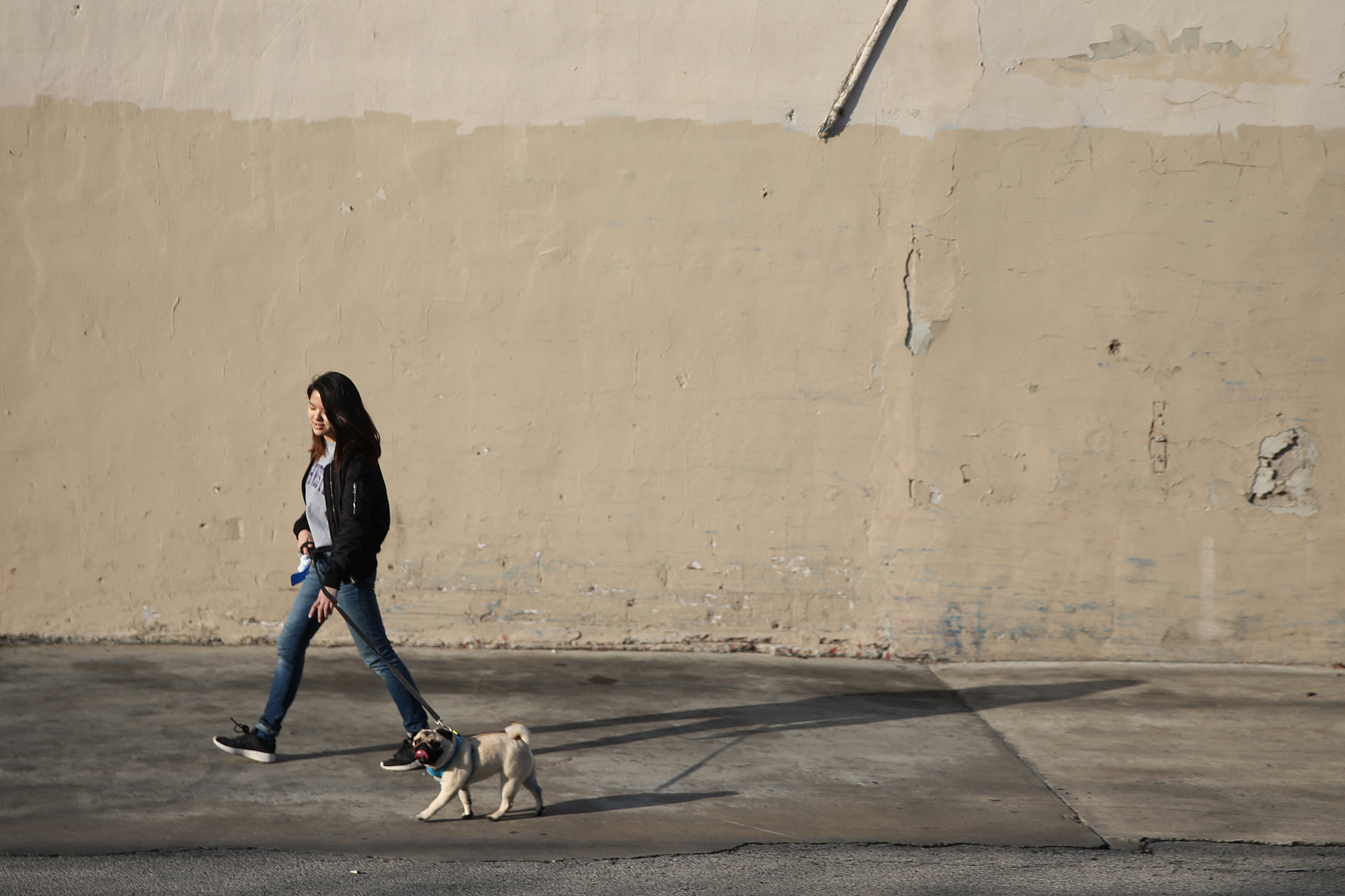 Inquirer reporter Bethany Ao walks her pug, Pinto, back home in the Poplar neighborhood after taking her to a dog park on Friday, April 6, 2018. Taking care of a dog can be challenging for young professionals.