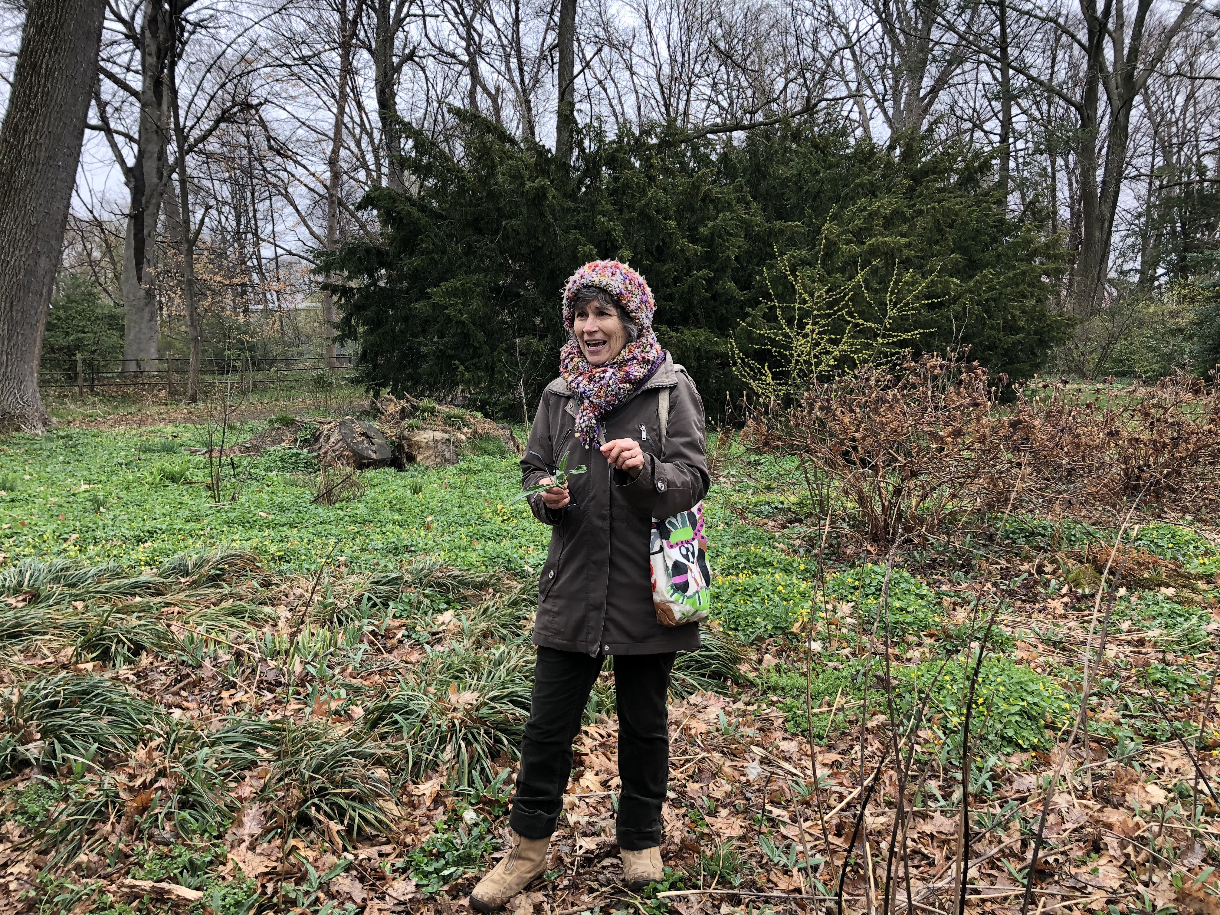The Wild Foodies of Philly seek to introduce people to edible foods growing naturally in the surrounding environment.GRACE DICKINSON / STAFF