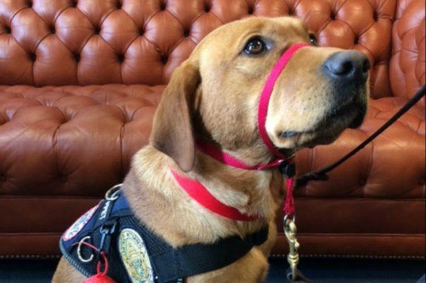 Bensalem Dog Rescue