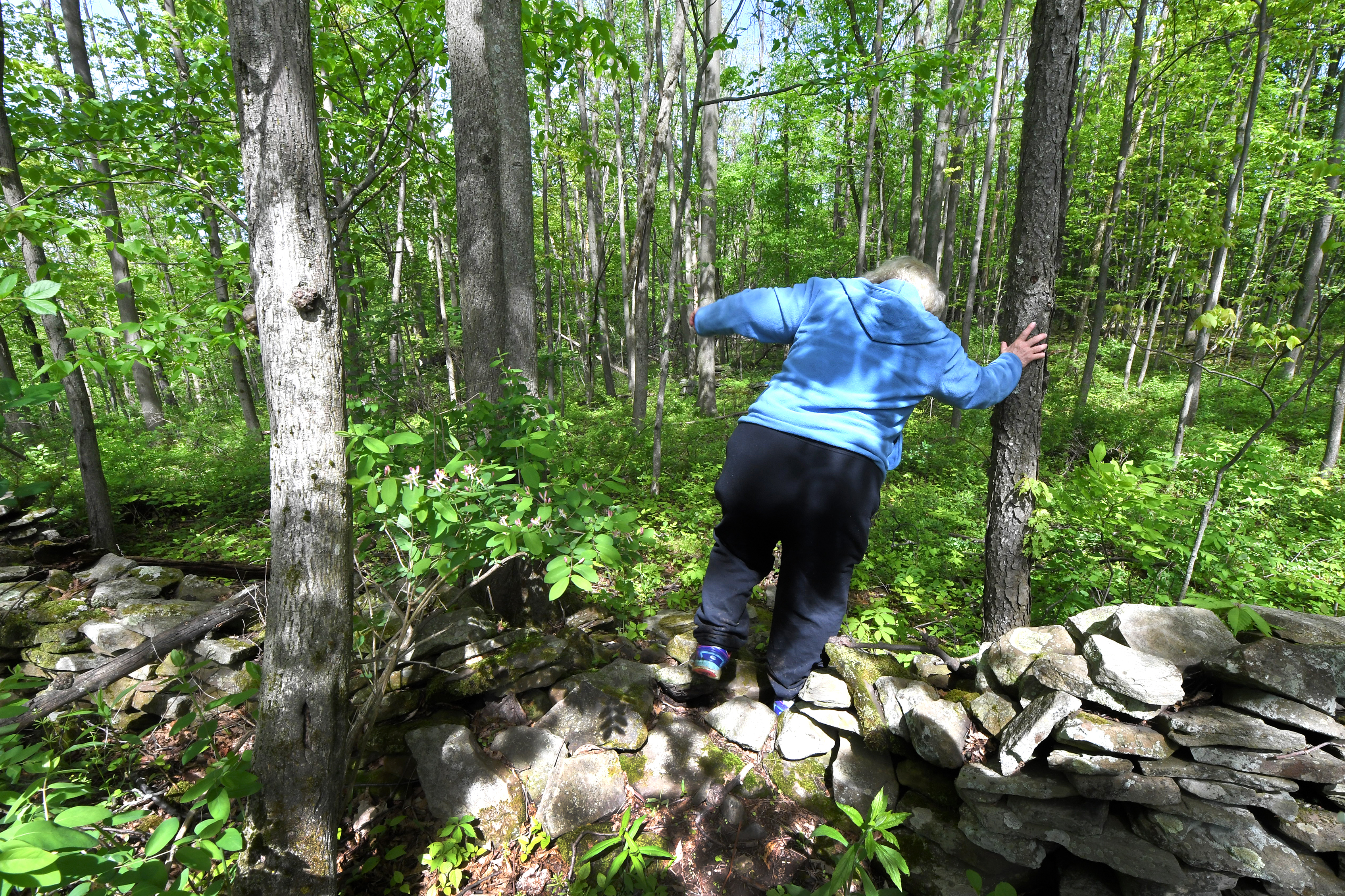 Rose Mary Knick walks over stones and rocks placed in her 90 acre property in Lackawana County, Pa. Monday, May 21, 2018. Several years ago, a family claimed an ancestor was buried on Rose Mary Knick´s 90 acre property in Lackawana County. That family went to council members in Scott Township to see about access and their decision is what led to Knick´s case being accepted by the U.S. Supreme Court. Scott Township ordered Knick to open up her land to this family and therefore everyone without, according to her attorneys, any compensation. The family has not proven their loved one is buried there either. JOSE F. MORENO / Staff Photographer