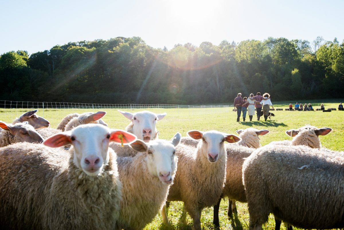 """""""Doggie Hamlet,"""" a performance piece featuring dancers, dogs and a flock of sheep, will be making its Philadelphia premiere during PIFA 2018."""