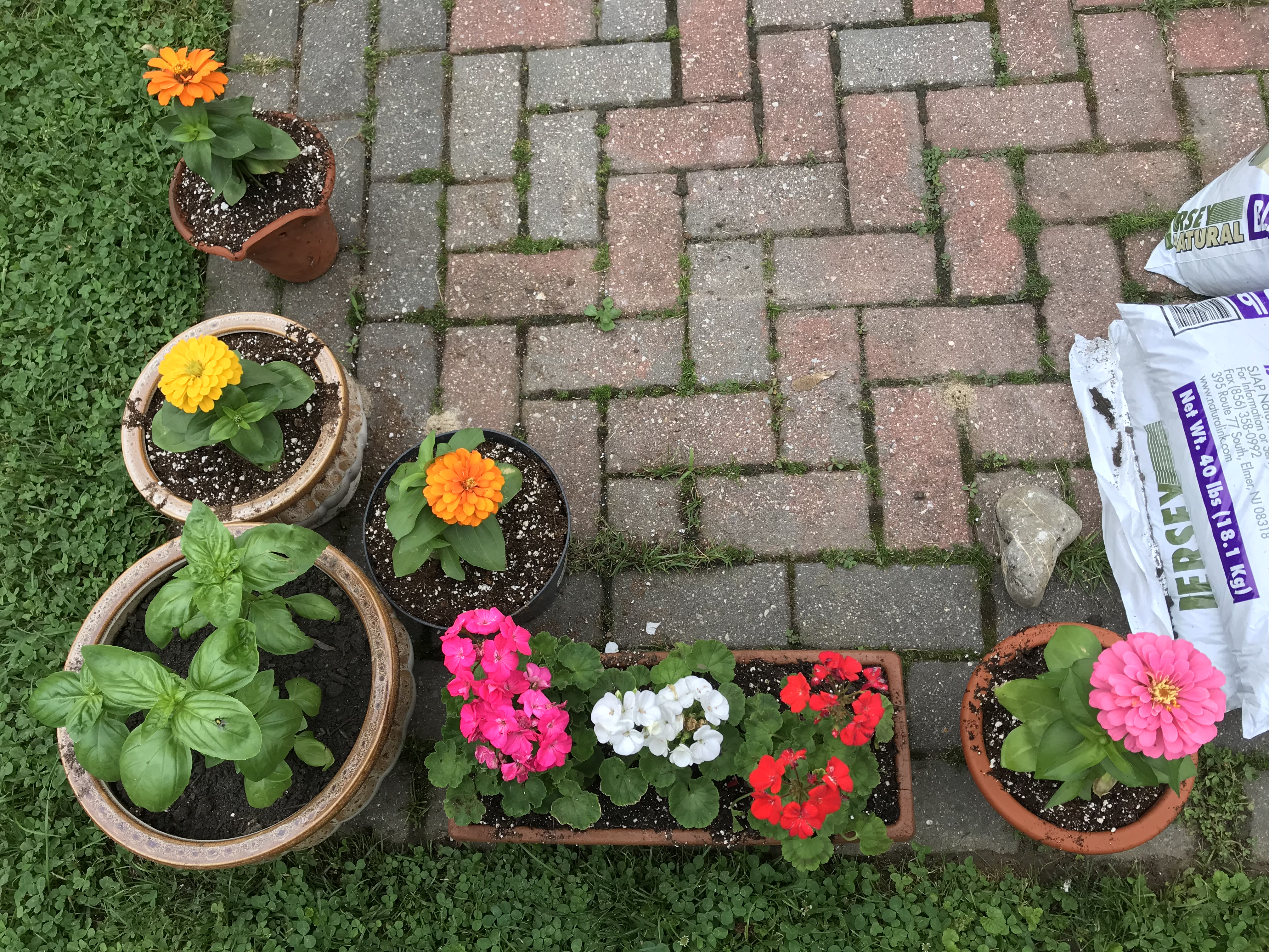 Zinnias, basil, and geraniums alongside a box full of vegetable plants that will make up a small summer garden - and bring to life the memory of a long-lost mother, too.