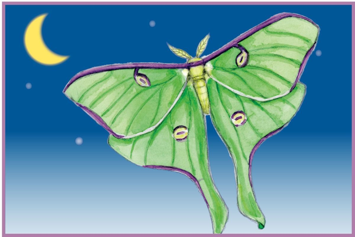 Art Thief display art for luna moth. Amy Raudenbsuh #submittedImage