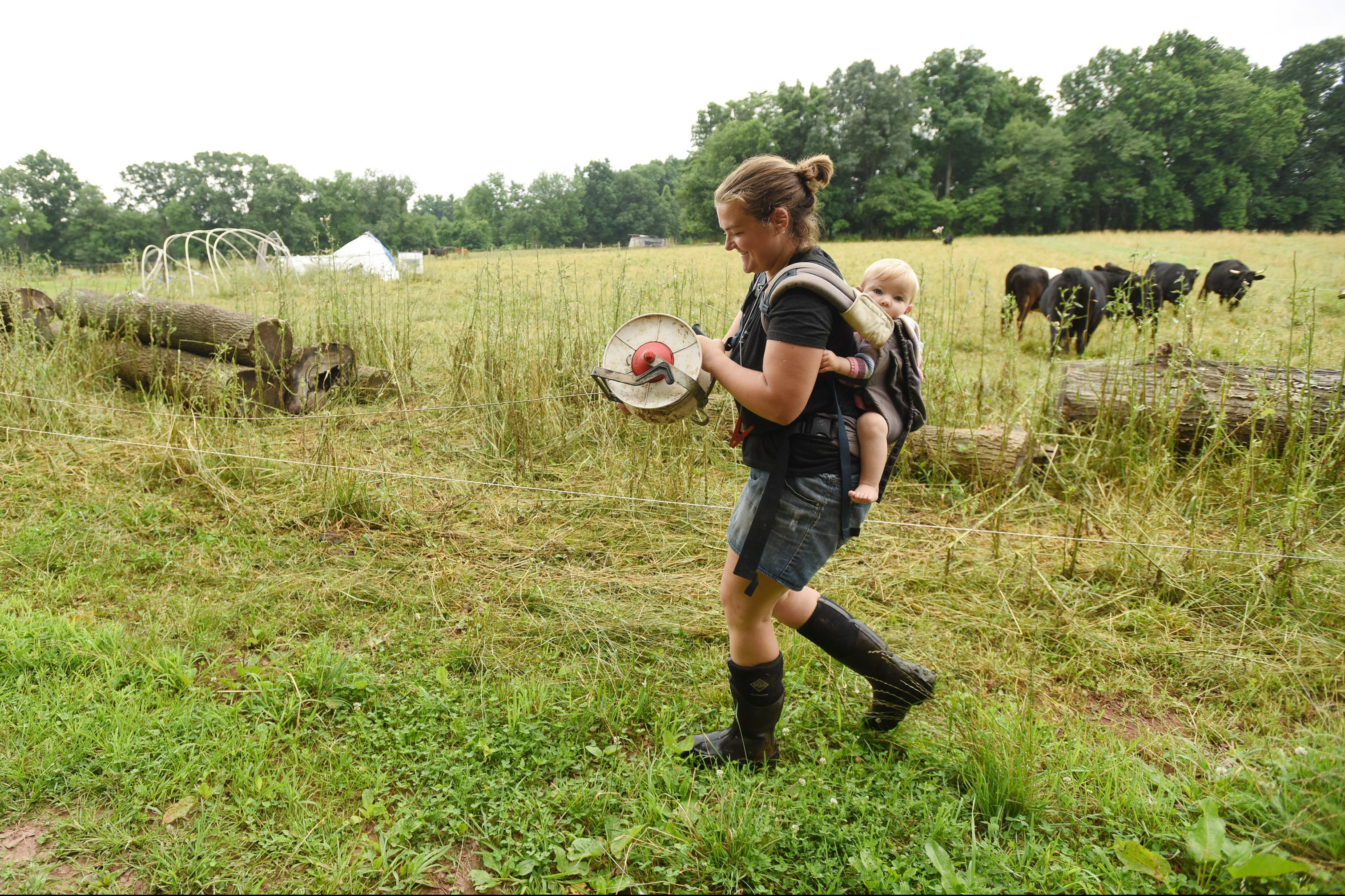 """Mary Benton, along with her 10-month-old daughter Isabelle, restrings an electric fence at the """"Snouts and Sprouts"""" Farm in Pottstown, PA., on Wednesday, June 27, 2018."""