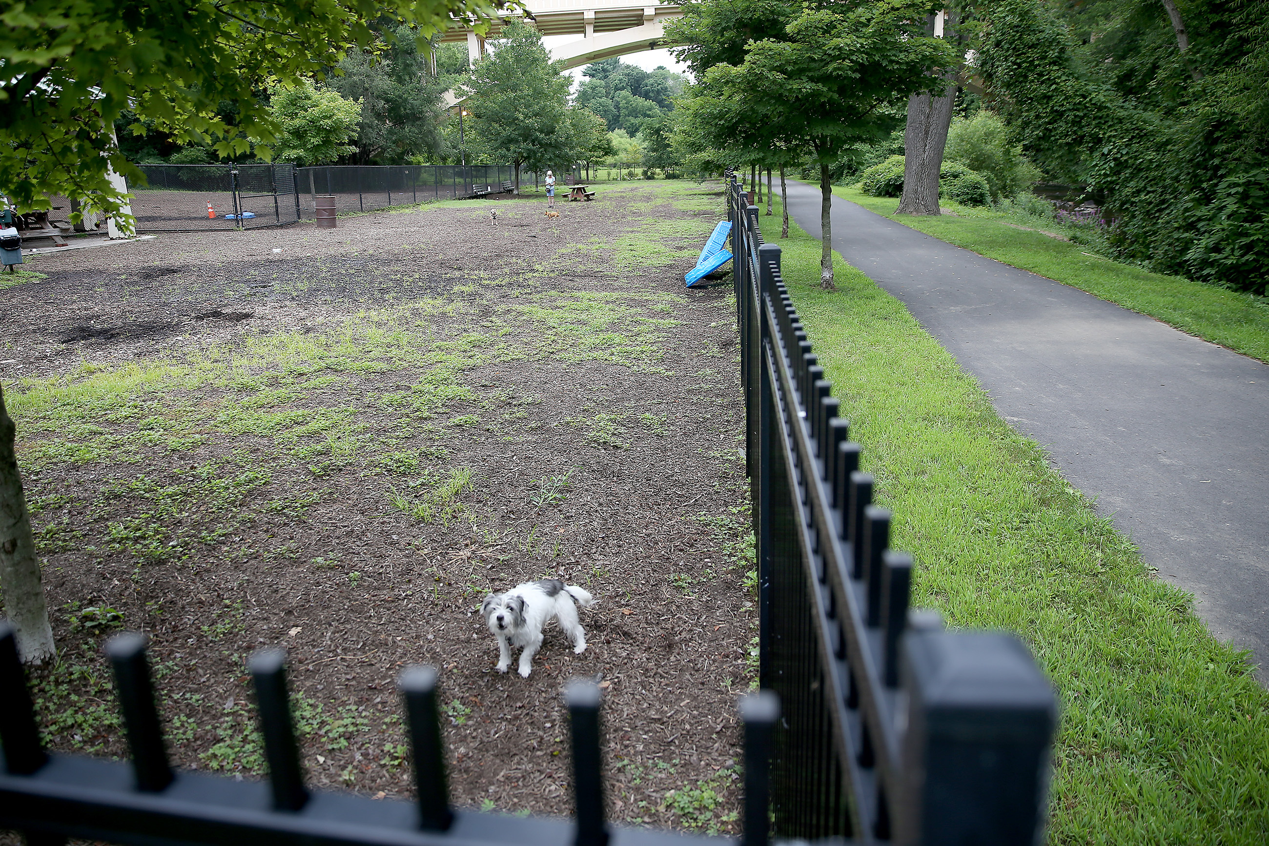 A dog barks in the Kent Dog Park along the Darby Creek Trail on July 30, 2018 in Upper Darby.