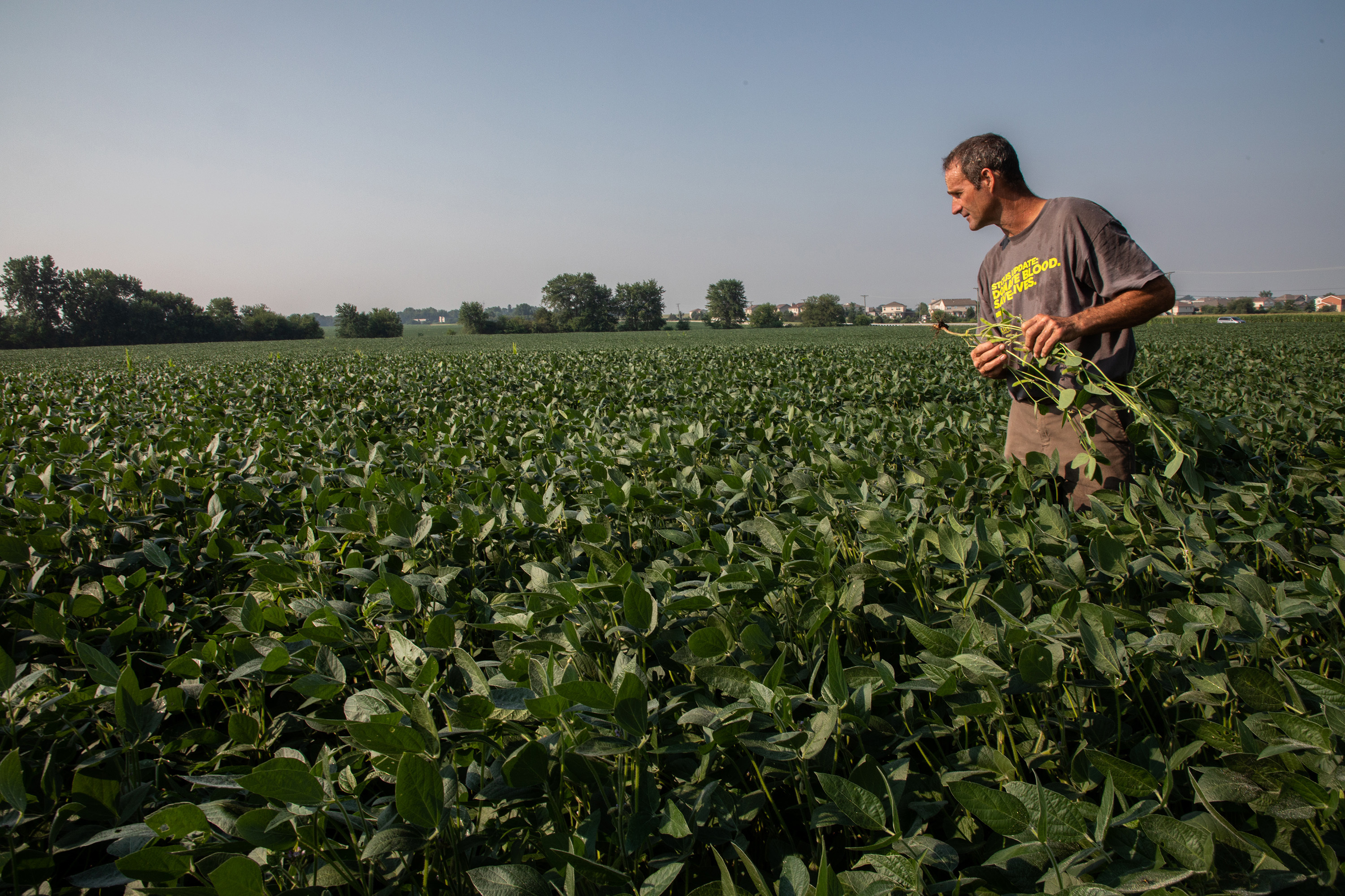 John Kiefner, 54, checks soybean plants on his farm in Will County, IL. The corn and soybean farmer and expects farmers will try to cut back on expenses with soybean prices down. He projects to make a profit only from production of straw and hay this year due to the trade war with China. (Zbigniew Bzdak/Chicago Tribune/TNS)