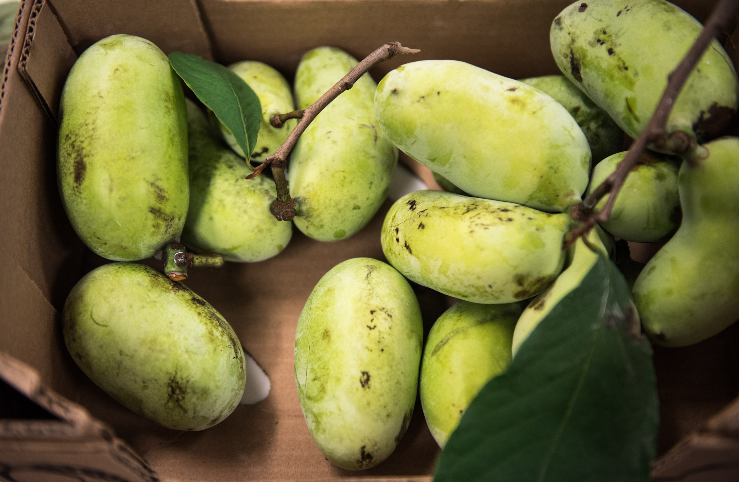 Easy to bruise and possessing a short, several-day shelf life, pawpaws are rarely found at supermarkets. Instead, look for them September through October at farmer´s markets and locally driven co-ops.