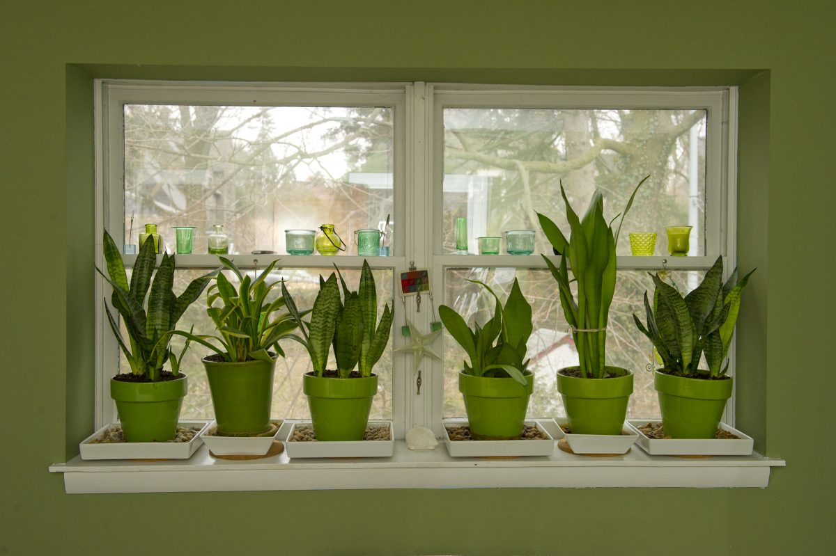 Make sure you clean those plants on the windowsill before bringing in the others.