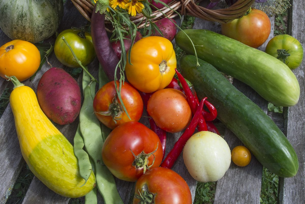 You can still plant squash, cucumbers — even early-girl-type tomatoes.