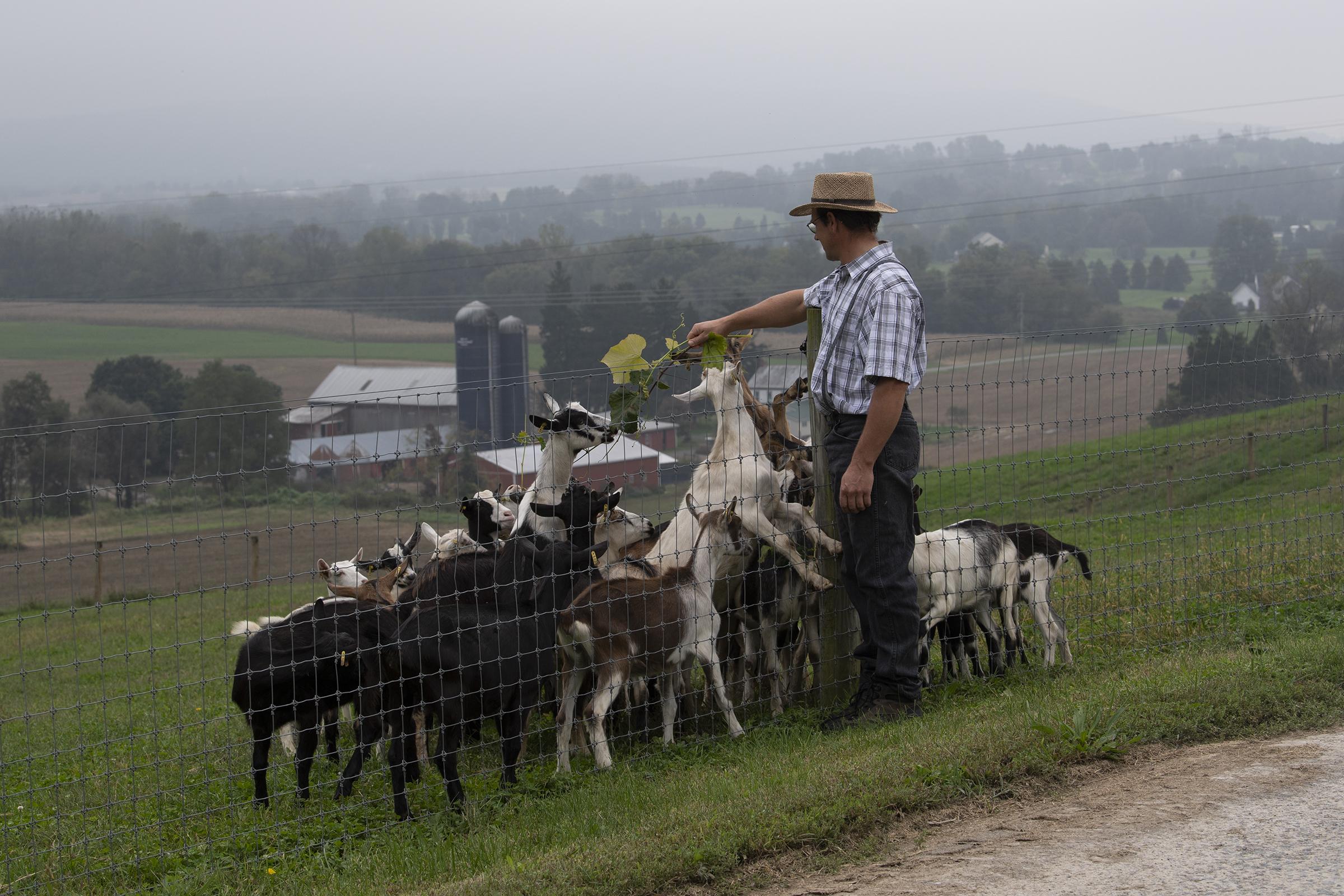 Farmer John Zimmerman feeds his goats at the Kirchenberg goat farm in Fleetwood, PA.