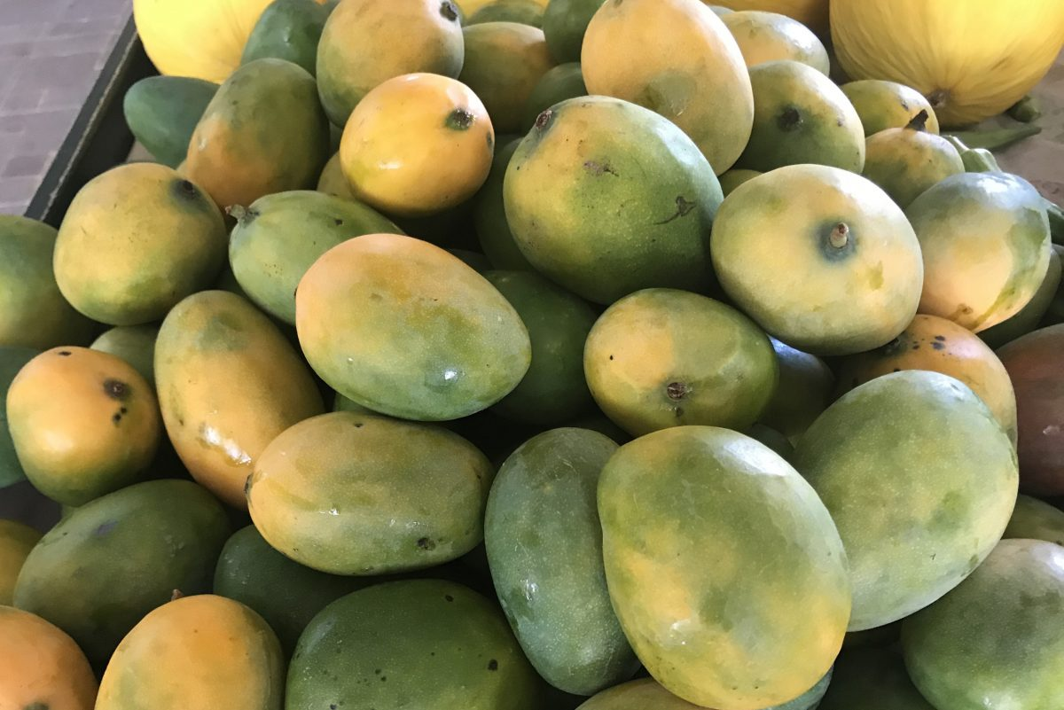 Fresh mangoes deserve more respect for their versatility in cooking.