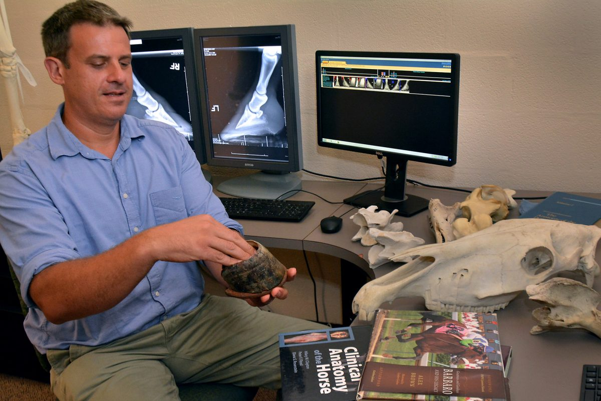Dr. Andrew Van Eps holds a horse hoof and explains laminitis at the New Bolton Center in Kennett Square.
