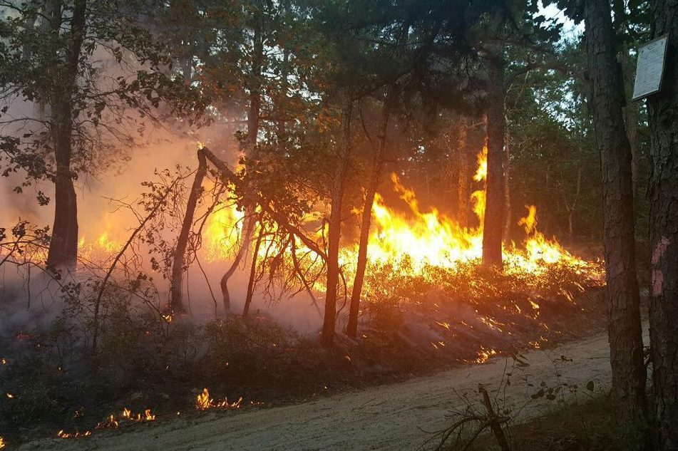 A fire burns in Wharton State Forest on Thursday, July 20, 2017