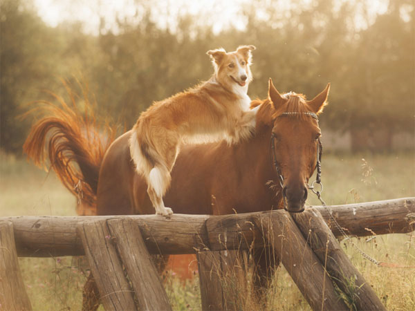 Is Dog Food Made From Horses