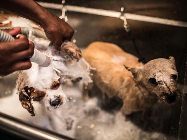 Philadelphia Dog Grooming School