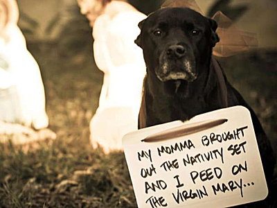 dog_shaming_400.jpg