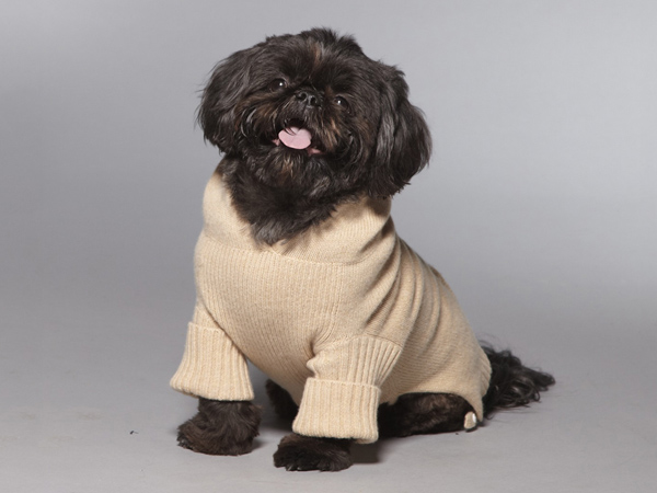 You can keep your dog warm by getting him an elegant 100-percent Italian cashmere sweater or hoodie from Chappy and Bailey.