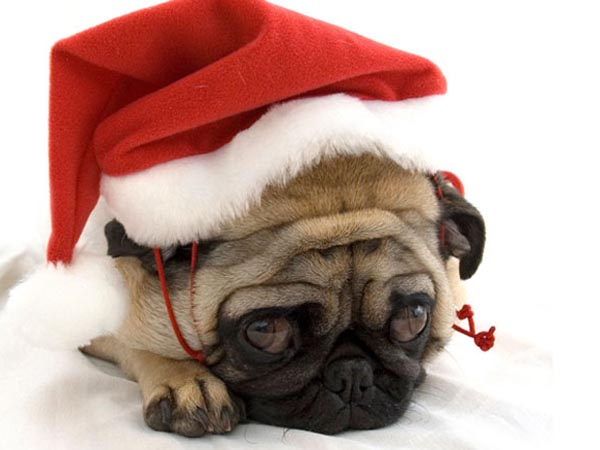 7 reasons not to give kids pets for Christmas