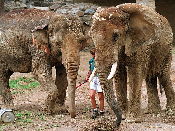 Dulary (left) and her longtime bud, Petal, in July 2000. (Gerald S. Williams/Staff)