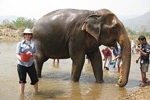 Visitor Andrea Worden helps senior resident Mae Khum Pun bathe at Elephant Nature Park in Thailand.