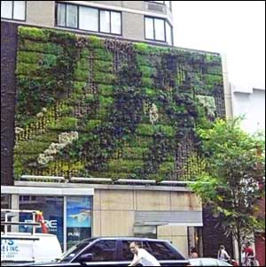 "A ""green wall"" outside Pure Yoga in NYC, from the company´s Web site."