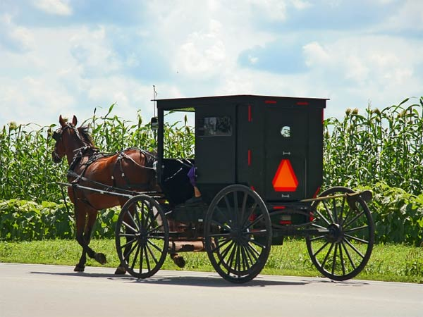 A masked assailant robbed a horse and buggy, like the one pictured above, in East Lampeter Township, Lancaster County, early Monday morning. (Photo via iStock)