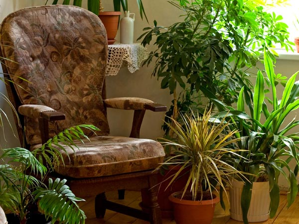 Besides saving your houseplants from imminent death outdoors, bringing them indoors is a treat for you during the long winter days ahead, says Mandy Stanley, a ceramic artist and Pilates instructor who lives in Acworth, Georgia.<br />