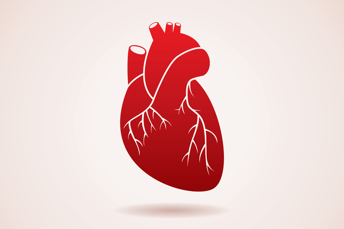 dating heart disease Therefore if someone is worth dating at all i am committed up to the point that i  feel  and the hereditary diseases are also the chronic ones, like heart disease, .