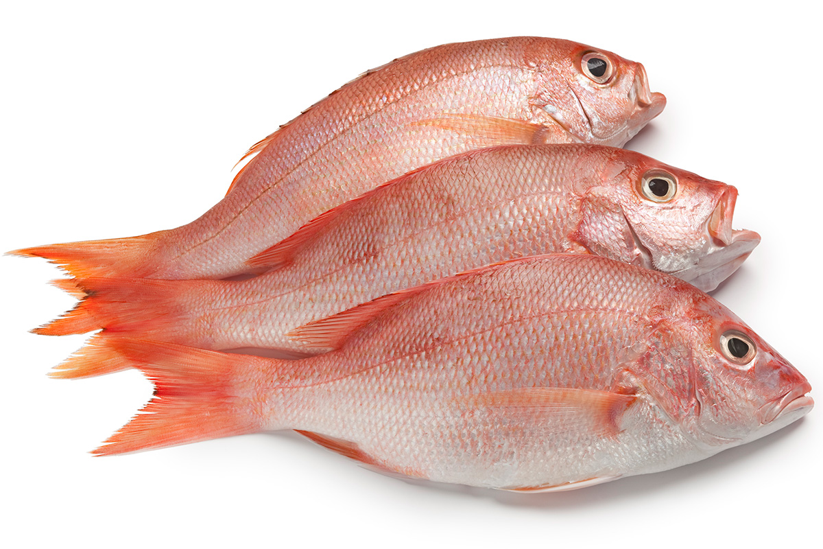 Sen. Richard Shelby, an Alabama Republican, put out a press release last week about a study of red snapper in the Gulf of Mexico, but nothing on health care.