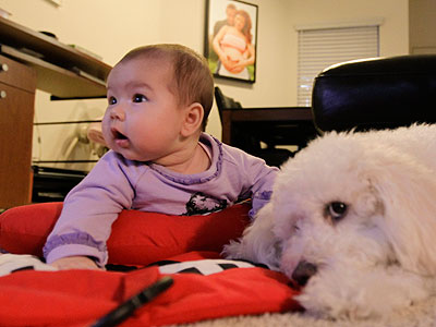 In a new study from the University of Rochester, 7- and 8-month-olds quickly lost interest in video animations of balls, pacifiers and colorful boxes that were too ho-hum predictable or too complex.  (AP Photo/Chris Carlson)